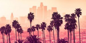 Los-Angeles-Palm-Trees-student-exchange-host-family